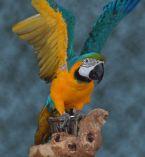 https://www.curezone.org/forums/tn-parrot.jpg