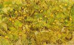 Een Gebied Van Gele Bloemen 1889