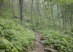 1 Applachian Trail Aug 2005 054