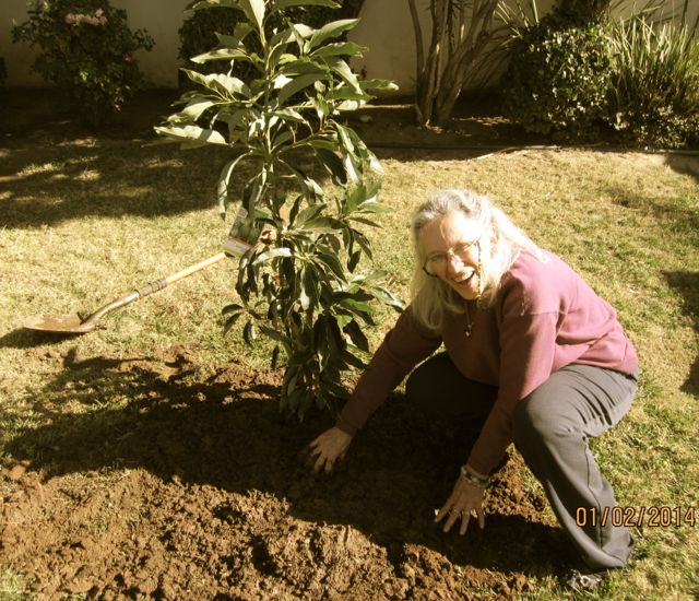 http://curezone.com/upload/Blogs/Your_Enchanted_Gardener/AriellaShira_Plants_Crystal_Cradle_2014_medium1.jpg