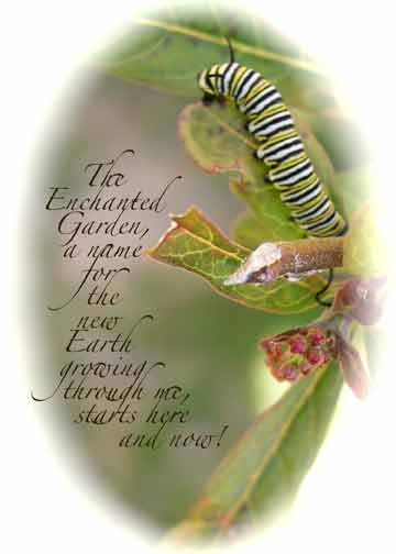http://curezone.com/upload/Blogs/Your_Enchanted_Gardener/Catepillar_card_for_web_21.jpg