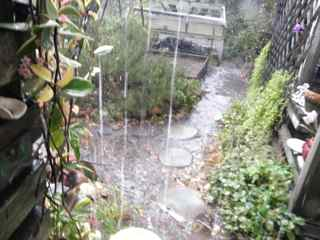http://curezone.com/upload/Blogs/Your_Enchanted_Gardener/Drought_Drenching_May_8_CacaoFestRain.jpg