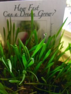 http://curezone.com/upload/Blogs/Your_Enchanted_Gardener/Grass_Growing_Small_Pac_Sym.jpg