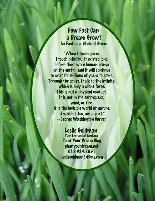 http://curezone.com/upload/Blogs/Your_Enchanted_Gardener/Grass_quote_Washington_Carver_Leslie_Goldman_YourEG3.jpg