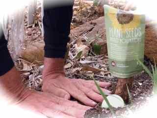 http://curezone.com/upload/Blogs/Your_Enchanted_Gardener/Hands_in_the_soil_Leslie_Plant_Seeds.jpg