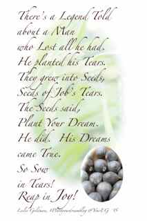 http://curezone.com/upload/Blogs/Your_Enchanted_Gardener/JOB_s_TEARS_CARD_by_Leslie_Goldman_Your_EG_Simple.jpg
