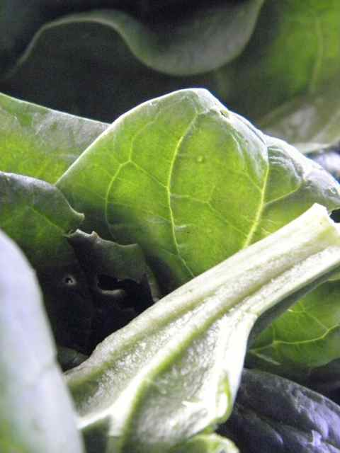 http://curezone.com/upload/Blogs/Your_Enchanted_Gardener/JR_Organics_Spinach_for_NFRF_Slideshow_proposal_Leslie_Goldman1.jpg