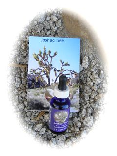 http://curezone.com/upload/Blogs/Your_Enchanted_Gardener/Joshua_Tree_Remedy.jpg
