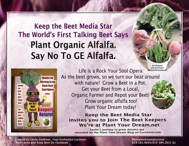 http://curezone.com/upload/Blogs/Your_Enchanted_Gardener/KEEP_THE_BEET_Plant_Alfalfa1.jpg