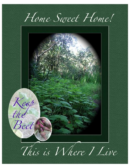 http://curezone.com/upload/Blogs/Your_Enchanted_Gardener/KEEP_the_BEET_Lives_here_25.jpg