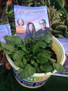 http://curezone.com/upload/Blogs/Your_Enchanted_Gardener/Keep_The_Beet_at_HIllcrest_FM_sm.jpg