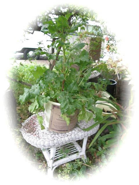 http://curezone.com/upload/Blogs/Your_Enchanted_Gardener/Keep_The_Beet_speaks.jpg