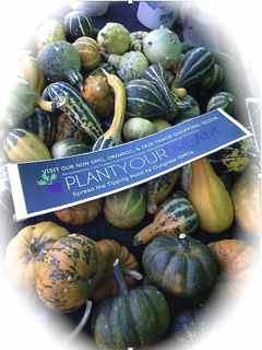 http://curezone.com/upload/Blogs/Your_Enchanted_Gardener/PlantYourDream_Blog_Logo_1.jpg