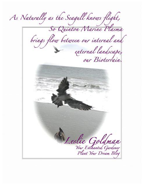 http://curezone.com/upload/Blogs/Your_Enchanted_Gardener/Quinton_Marine_Plasma_brings_flow.jpg