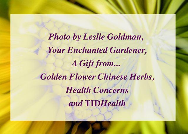 http://curezone.com/upload/Blogs/Your_Enchanted_Gardener/SUNflower_use_WBW.jpg