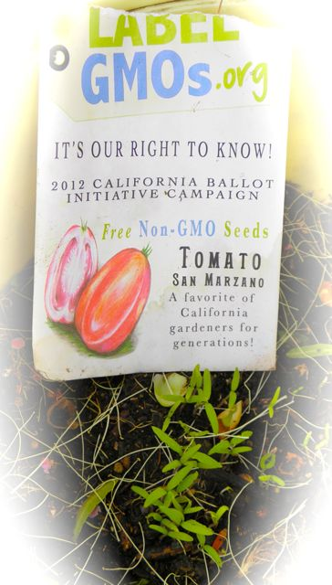 http://curezone.com/upload/Blogs/Your_Enchanted_Gardener/San_Marzano_Baker_Creek_Non_GMO_Tomato_Seeds_Leslie_GOldman_Your_EG.jpg
