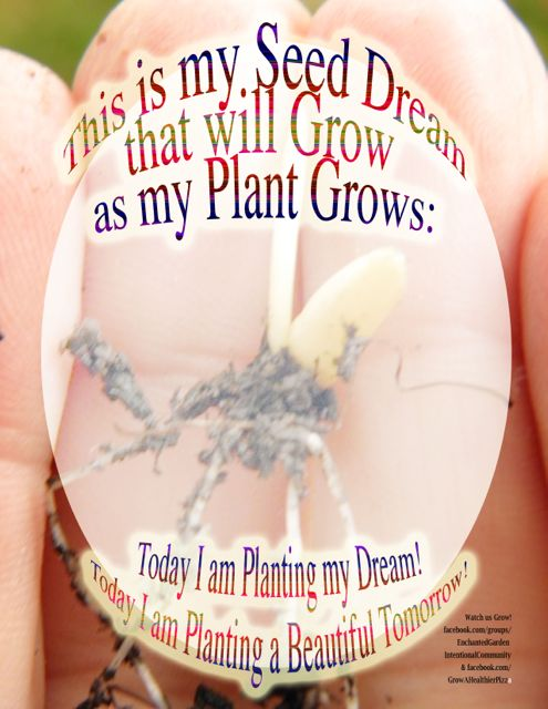 http://curezone.com/upload/Blogs/Your_Enchanted_Gardener/Seed_Dream_Form_Pizza_medium3.jpg