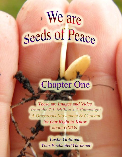 http://curezone.com/upload/Blogs/Your_Enchanted_Gardener/Seeds_of_Peace_Video_Chapter_One_1.jpg