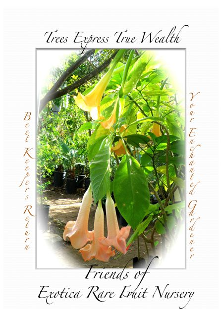 http://curezone.com/upload/Blogs/Your_Enchanted_Gardener/Trees_Exotica_campaign_3.jpg