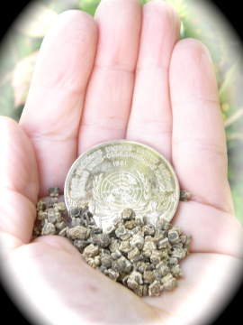 http://curezone.com/upload/Blogs/Your_Enchanted_Gardener/UN_Peace_Medal_Beet_seeds_2.jpg