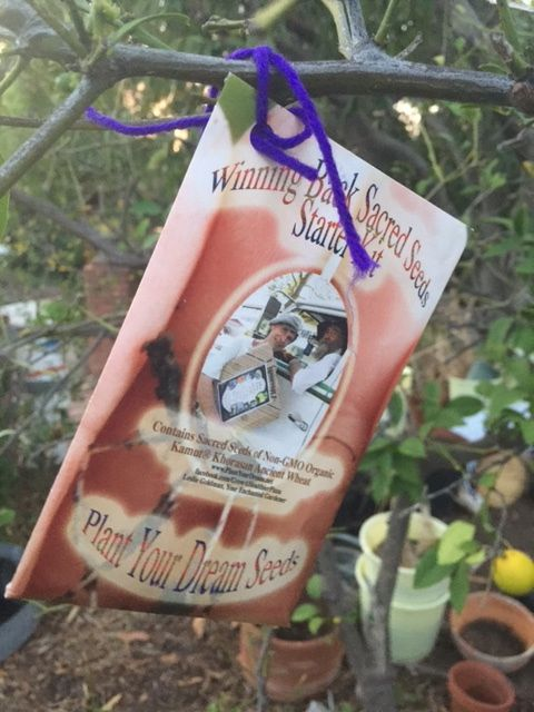 http://curezone.com/upload/Blogs/Your_Enchanted_Gardener/WINNING_BACK_SACRED_SEEDS_TREE_PHOTO.jpg