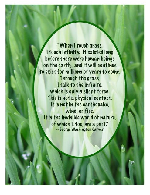 http://curezone.com/upload/Blogs/Your_Enchanted_Gardener/grass_quote_1_1.jpg