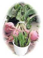 http://curezone.com/upload/Blogs/Your_Enchanted_Gardener/tn-beet_and_grass_blog.jpg