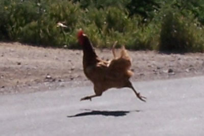 http://curezone.com/upload/Blogs/Zoebess/chicken.jpg