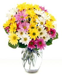 http://curezone.com/upload/Blogs/Zoebess/daisies.jpg