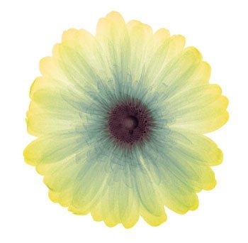 http://curezone.com/upload/Blogs/Zoebess/lemon_nectar.jpg