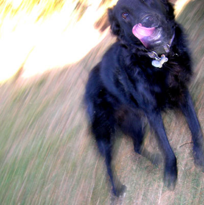 http://curezone.com/upload/Blogs/dogdance.jpg