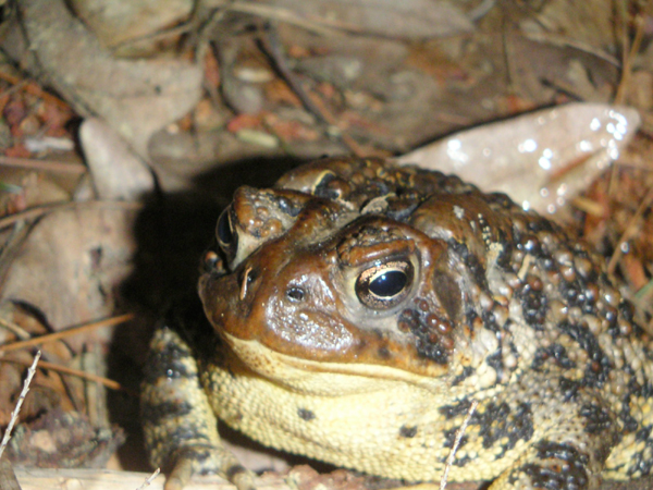 http://curezone.com/upload/Blogs/toad.jpg