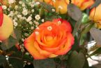 rosetall