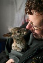 baby kangaroo 1