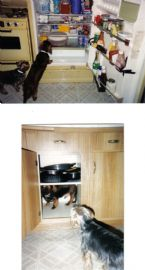 dog gone fun in the kitchen 01