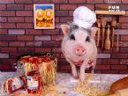 rich pig 06