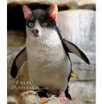 strange pinguin