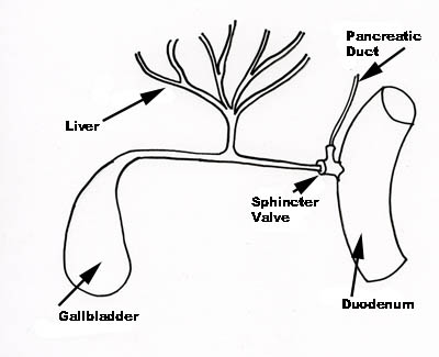 biliary function