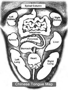 Reflex Zones of the Tongue 22