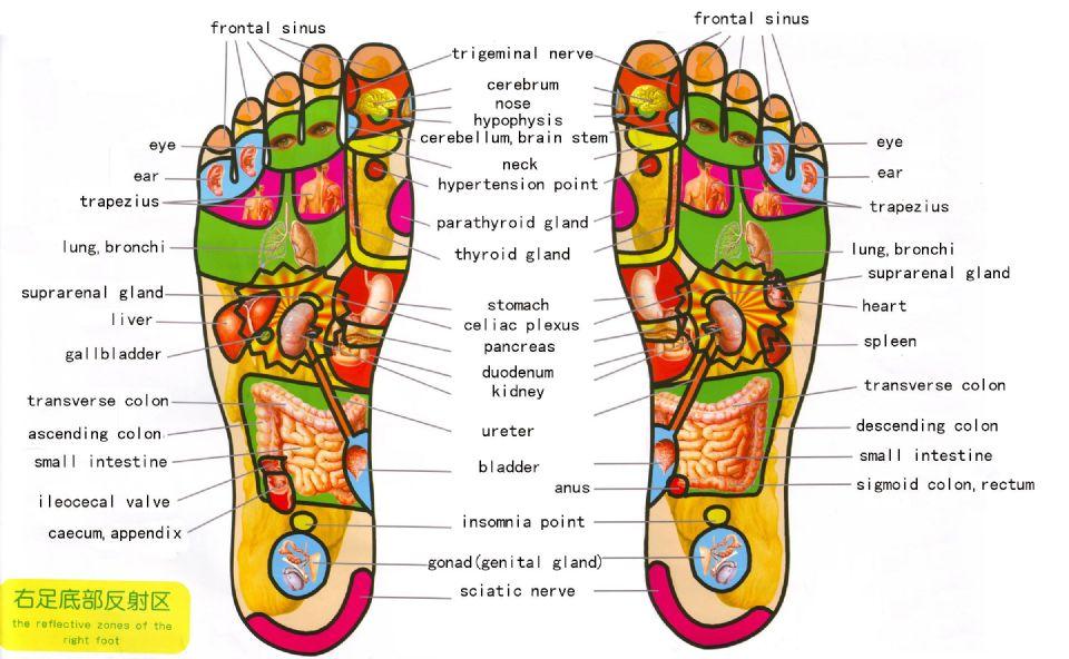 Reflex Zones of the feet