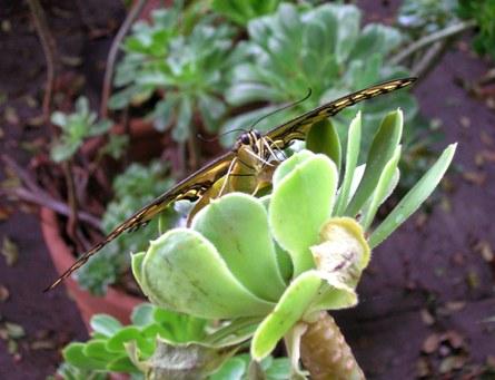http://curezone.com/upload/Members/Curezone_closeup_butterfly_2.jpg