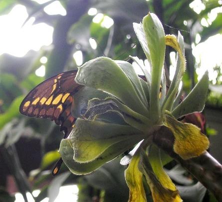http://curezone.com/upload/Members/Curezone_closeup_butterfly_3.jpg