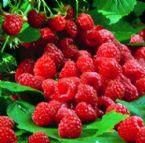Red raspberry anthocyanin