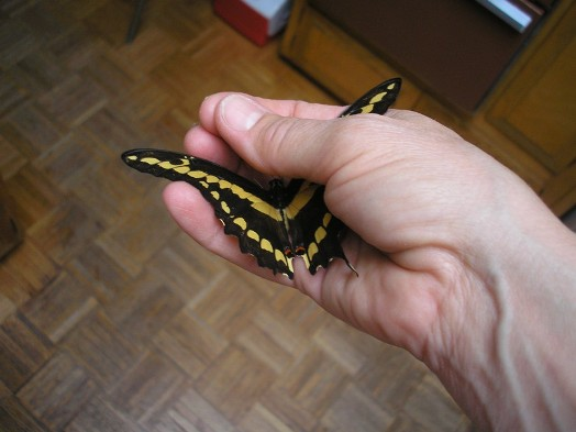 http://curezone.com/upload/Members/LioraLeah/Curezone_Butterfly4_10_22_2007.jpg