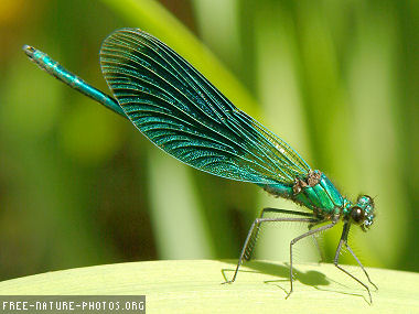 http://curezone.com/upload/Members/LioraLeah/Dragonfly_photo.jpg