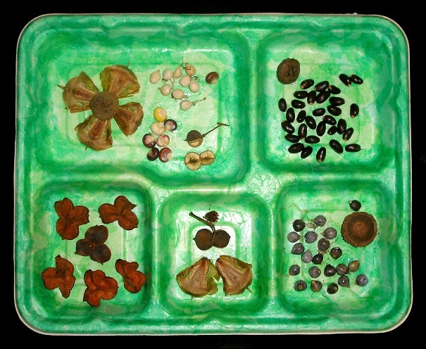 http://curezone.com/upload/Members/Mayah/Artwork/Art_from_Nature_Seed_Tray_6_2009.jpg