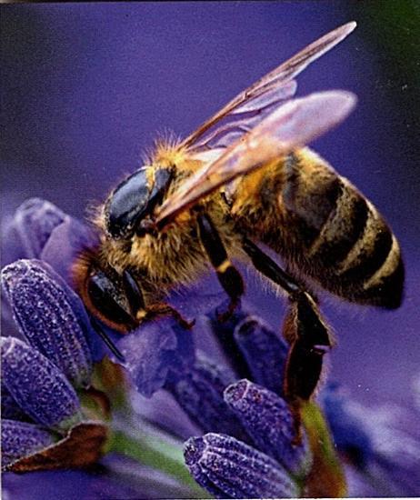 https://www.curezone.org/upload/Members/Mayah/Bee_01_2018_cz.jpg