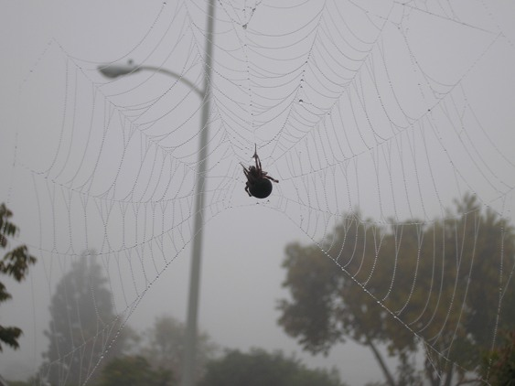 http://curezone.com/upload/Members/Mayah/Garden_Spider_Whole_Web_Mayah_11_2010.jpg