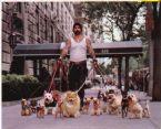 Tough guy walking dogpack