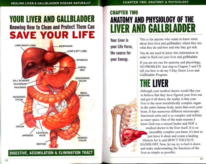 Exelent Anatomy And Physiology Of Liver And Gallbladder Images ...